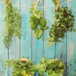 Herbal Healing: Herbs that Help Chronic Pain & Illness