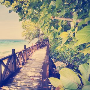 Tropical Walkway Instagram Style