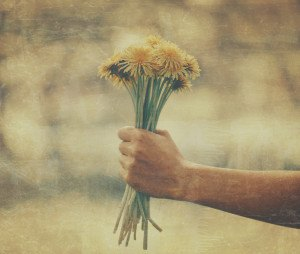 Woman holding bouquet of yellow dandelions outdoor in summer close-up of hand with flowers. Vintage image