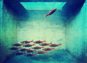 one fish swimming the opposite way the rest of the school is ton